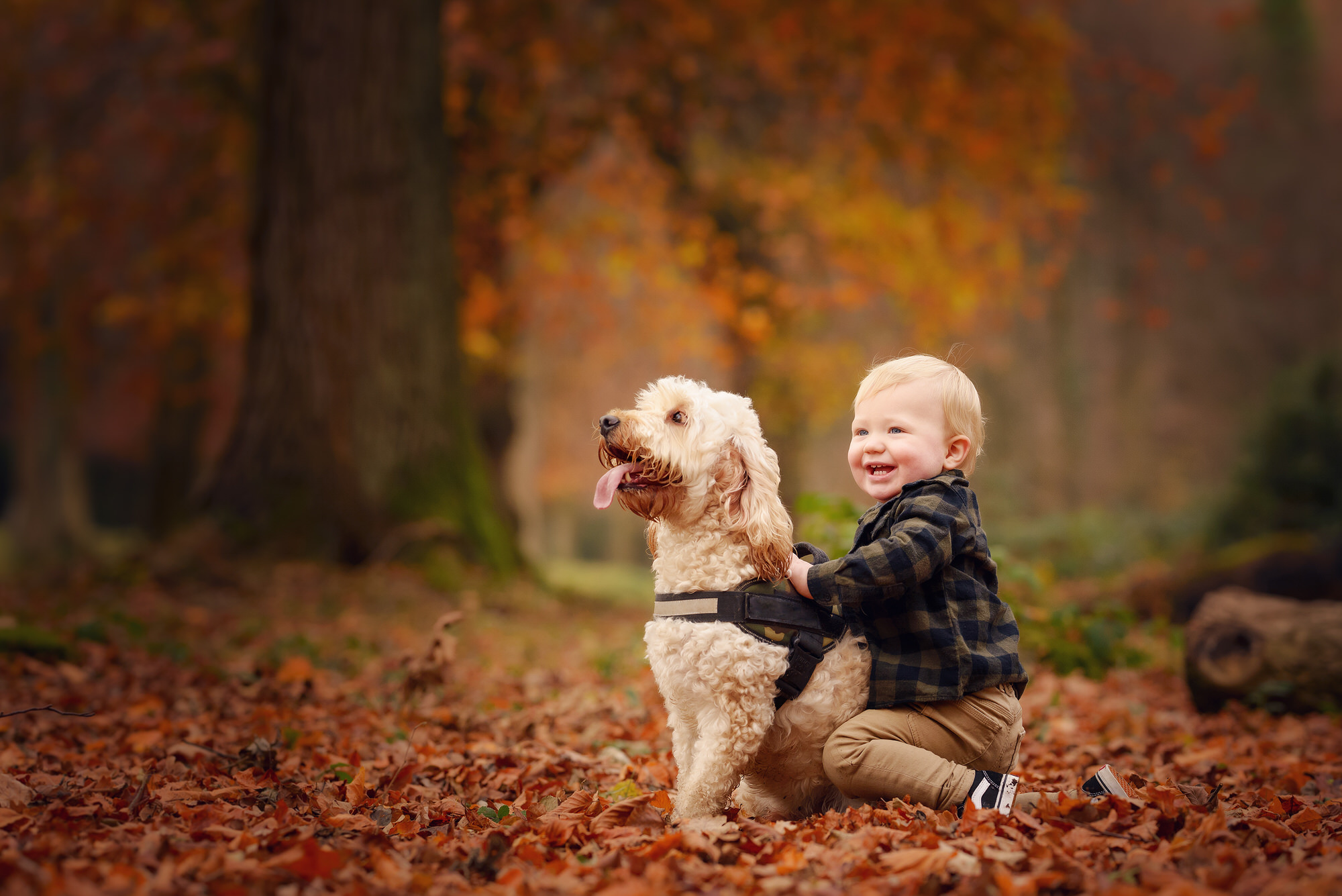little boy in autumn leaves with his dog